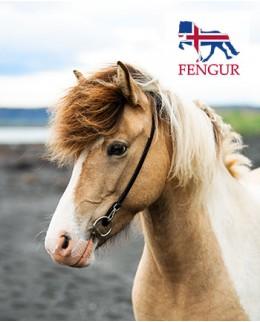 Аксессуары для лошади