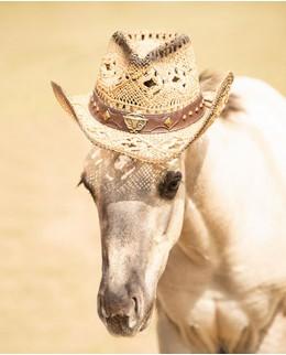Вестерн шляпы