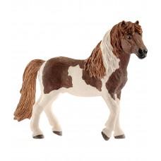 Исландский пони II (жеребец)
