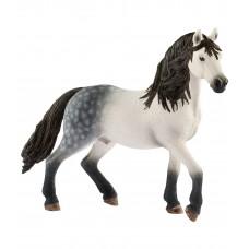 Андалузская лошадь (жеребец)