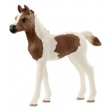 Пинтабская лошадь (жеребенок)