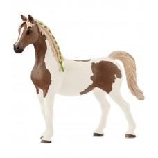 Пинтабская лошадь (кобыла)