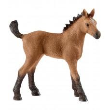 Американская Quarter Horse (жеребенок)