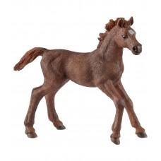 Чистокровная верховая лошадь (жеребенок)
