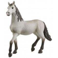 Pura Raza Espanola (молодая лошадь)